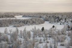 Landskape зимы с лесом в снеге в заходе солнца вечера северно Стоковые Фото