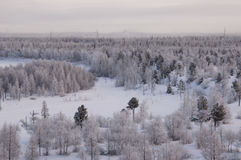 Landskape зимы с лесом в снеге в заходе солнца вечера северно стоковая фотография rf