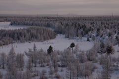 Landskape del invierno con el bosque en nieve en la noche north Foto de archivo