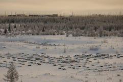 Landskape del invierno con el bosque en nieve en la puesta del sol de la tarde north Imágenes de archivo libres de regalías