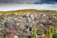 Landskape hermoso de la montaña, piedras, flores, cielo azul fotos de archivo