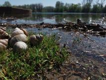 Landskape river. Empty shells of river snails on the river bank Royalty Free Stock Photography