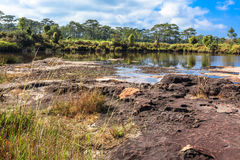 Landskapet av buskar och träd runt om en torr sjö med lite av vatten och gräs vaggar på i förgrund Arkivfoto
