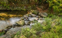 Landskapet av den lilla strömmen i lantlig skogsmark parkerar Royaltyfria Foton