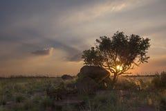 Landskapet av ett träd på kullen med vaggar och fördunklar på solnedgången arkivbild