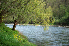 Landskapet av floden gav sig Royaltyfria Foton