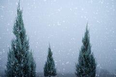 Landskapet av julgranen sörjer eller gran med snöfall på himmelbakgrund i vinter Royaltyfri Fotografi