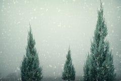 Landskapet av julgranen sörjer eller gran med snöfall på himmelbakgrund i vinter Fotografering för Bildbyråer