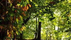 Landskapet av kastanjebruna trän under nedgångsäsong med varnar färger arkivfilmer