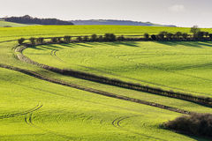 Landskapet av söderna besegrar Royaltyfri Bild