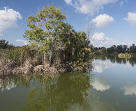 Landskapet av sjöar parkerar i Fort Myers, Florida Royaltyfri Fotografi