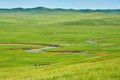 Landskapet av sommargrässlätten av Hulunbuir arkivfoto
