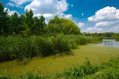 Landskapet av Taihu sjön fotografering för bildbyråer