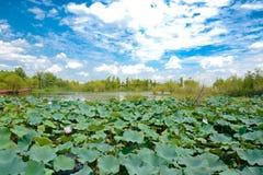 Landskapet av Taihu sjön arkivbilder