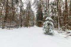 Landskapet av vintern sörjer och den prydliga skogen som täckas med frost på Royaltyfri Fotografi