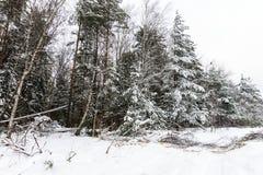 Landskapet av vintern sörjer och den prydliga skogen som täckas med frost på Arkivfoton