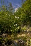 Landskapet blommar nära liten vik Royaltyfria Foton