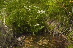 Landskapet blommar nära liten vik Arkivbild