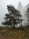 landskapet för naturskoghösten sörjer arkivbild