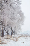 Landskapet för rimfrostö - Jilin - Kina arkivbilder