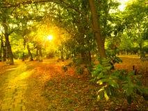 Landskapet för solnedgångljusframdelen i höst parkerar Royaltyfri Bild