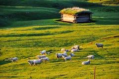 Landskapet i västra Sichuan Royaltyfri Fotografi