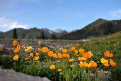 Landskapet i västra Sichuan Fotografering för Bildbyråer