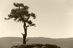Landskapet med ensamt sörjer trädet och berget i sepiasignal Arkivbild
