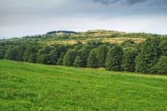 Landskapet med gräsplanfält och kullar fodrade med lövrika träd Fotografering för Bildbyråer