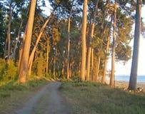Landskapet med havssikt och sörjer träd på kusten Pitsunda A Arkivfoton