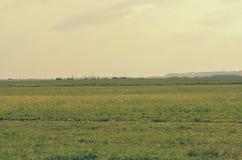 Landskapet med långväga berg och saltar växter i Soligorsk i Republiken Vitryssland Arkivfoton
