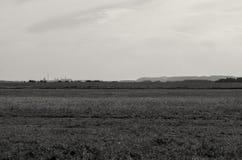 Landskapet med långväga berg och saltar växter i Soligorsk i Republiken Vitryssland Royaltyfri Bild