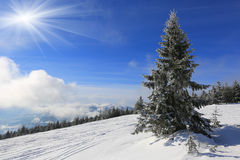 Landskapet med sörjer i berg royaltyfria bilder