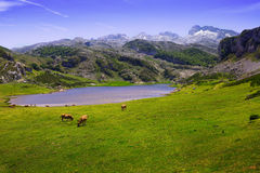 Landskapet med sjön och betar Royaltyfria Bilder