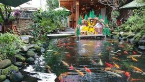 Landskapet och Koi Fish, kopplar av utrymme! royaltyfria foton