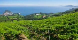 Landskapet och kustlinjen i Getaria omgav vid vingårdar Royaltyfri Foto