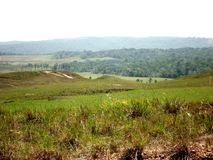 landskapet parkerar stor savannahamazon Venezuela gräsplan royaltyfria foton