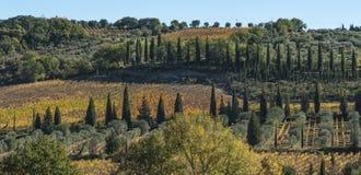 Landskapet runt om den romanska abbotskloster av Sant Antimo är en tidigare Benedictinekloster i comunen av Montalcino Royaltyfri Bild