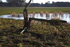 Landskapet, vinterplats av det djupfrysta dammet Arkivfoto