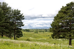 Landskapfält mellan granarna Royaltyfri Foto