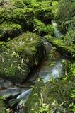landskapfjäder Royaltyfria Bilder