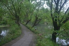 Landskapfoto av Xixi våtmark parkerar, Hangzhou royaltyfria foton