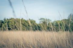 Landskapfoto i Nederländerna Arkivfoto