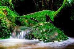 Landskapfotoet, den härliga vattenfallet och lönnen i rainforesten, vattenfall i Thailand Arkivbilder