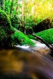 Landskapfotoet, den härliga vattenfallet och lönnen i rainforesten, vattenfall i Thailand Fotografering för Bildbyråer