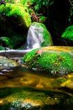 Landskapfotoet, den härliga vattenfallet och lönnen i rainforesten, vattenfall i Thailand Royaltyfri Bild