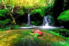 Landskapfotoet, den härliga vattenfallet och lönnen i rainforesten, vattenfall i Thailand Royaltyfria Foton