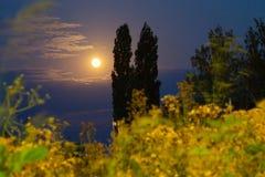 Landskapfullmåne i himlen med träd i förgrunden royaltyfri foto