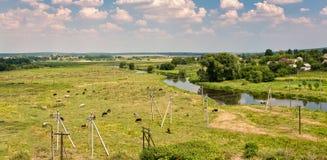 Landskapgräs som betar den flödande floden för kor Arkivfoto