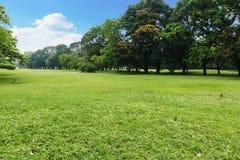 Landskapgräsmatta i parkera Arkivfoton